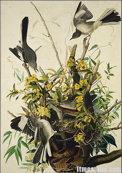 John James Audubon Image