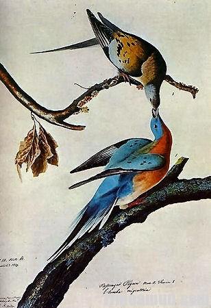 john james audubon passenger pigeon